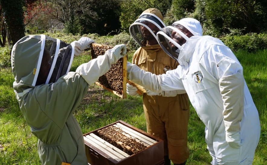 Guests opening up the beehives