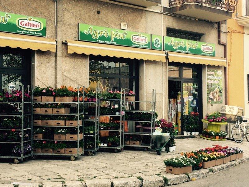 entrata del negozio AGRI PIU con le piante fuori dal negozio