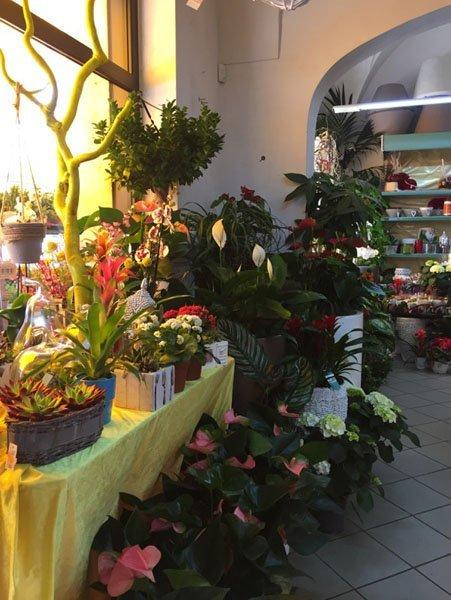 piante e fiori dentro un negozio