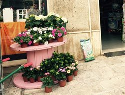 dei vasi con fiori