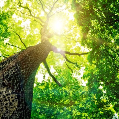 visuale dal basso di un albero rigoglioso