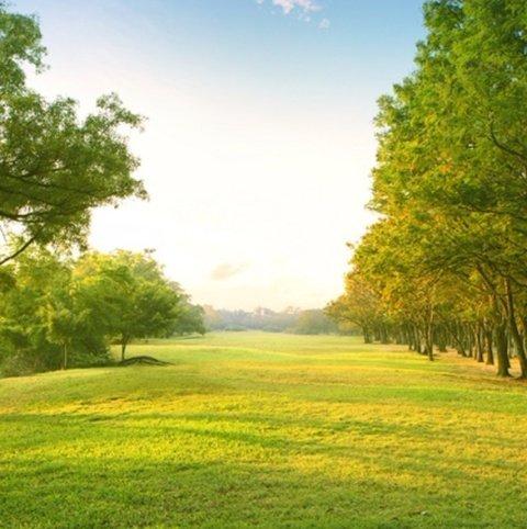 prato verde con alberi sullo sfondo