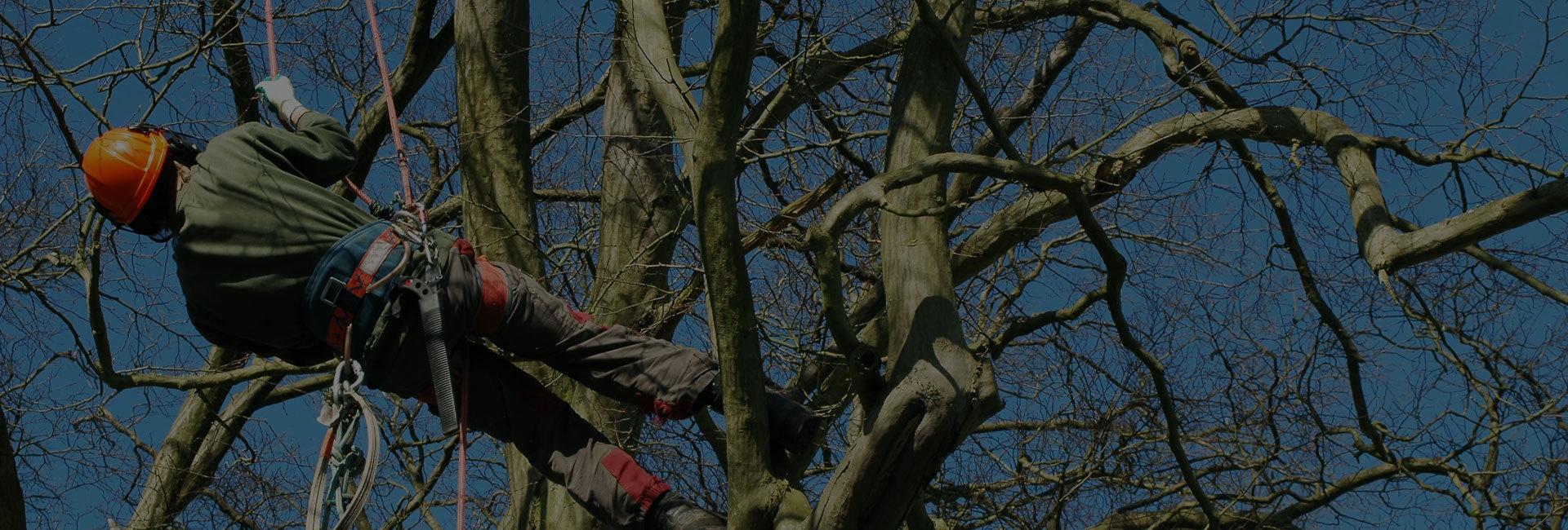 arboricultural