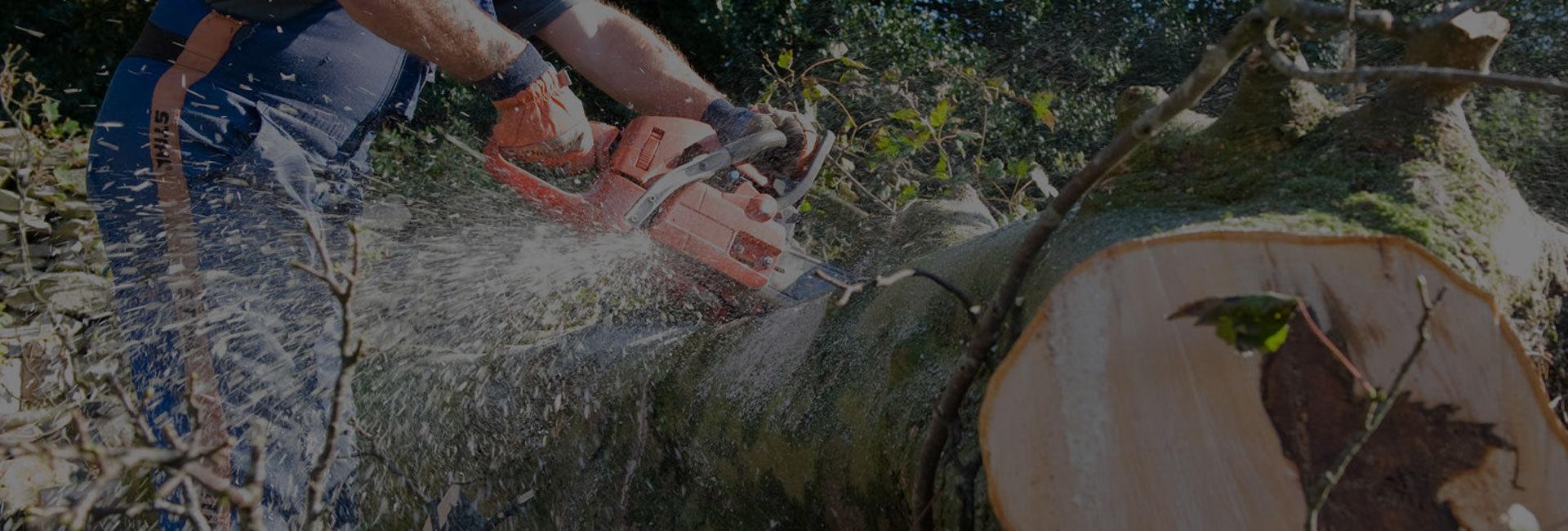 arboricultural experts