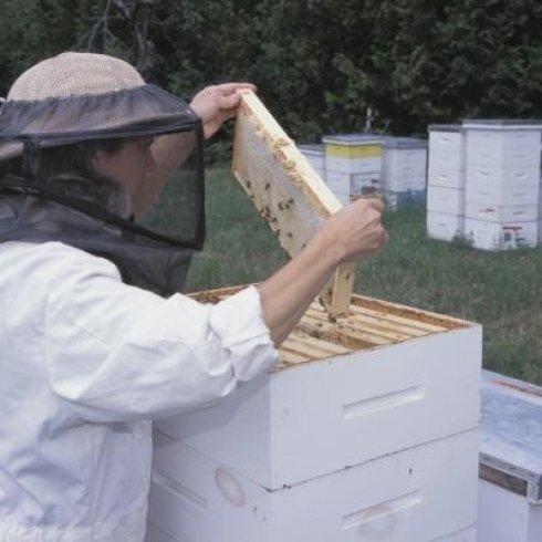 Arnie e altre attrezzature per apicoltori