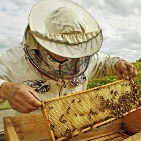 Cassette per api, fogli di cera e telai