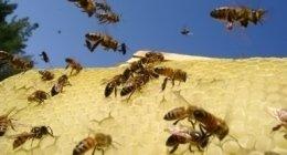 arnie per api