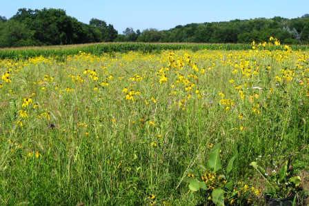 New Prairie in August