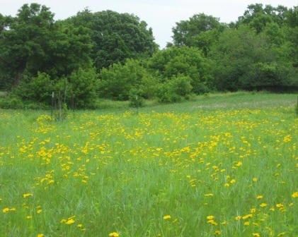 New Prairie in June