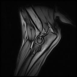 chirurgia ortopedica
