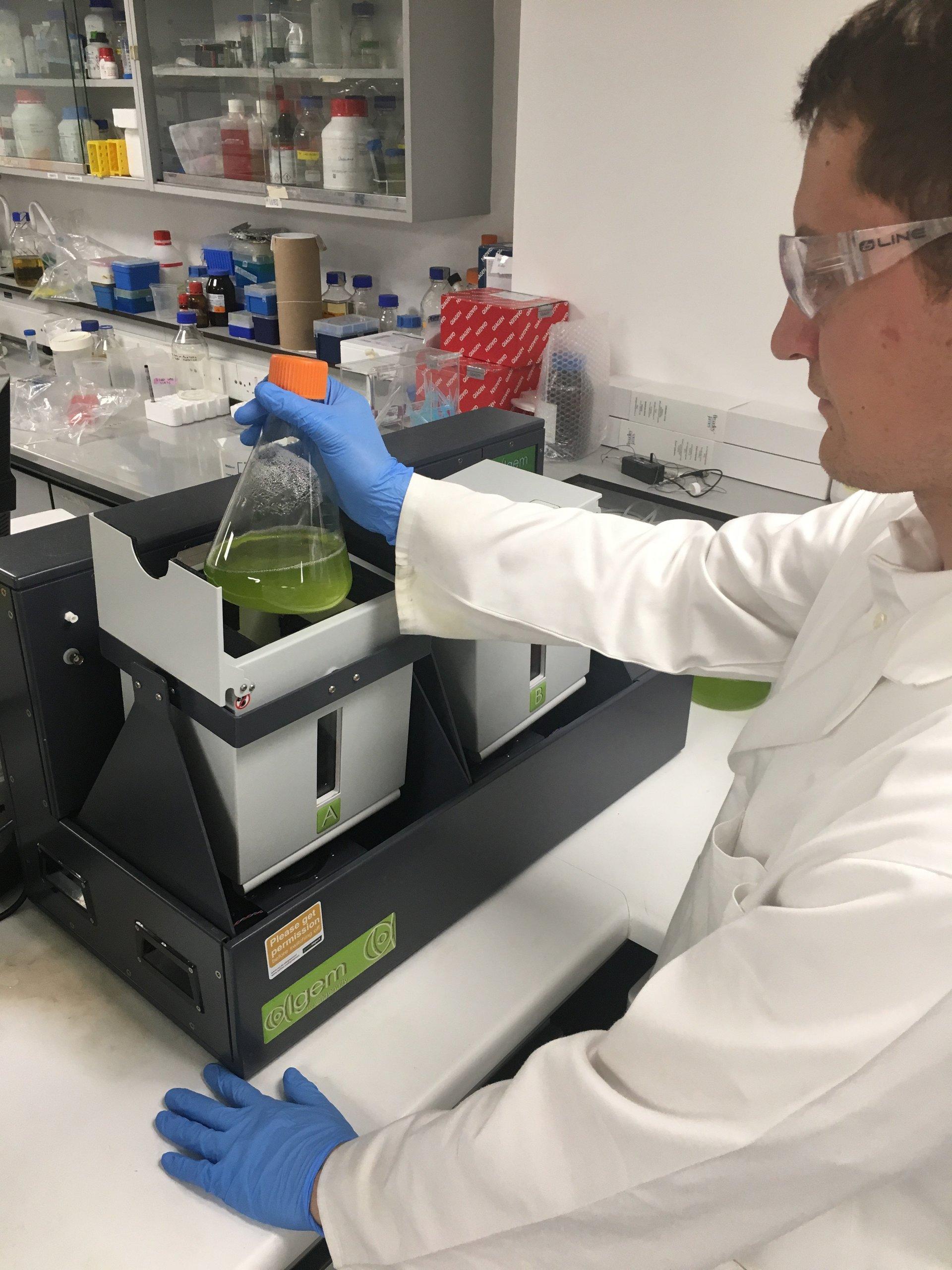 Scientist holding Erlenmeyer flask with algae near labscale photobioreactor