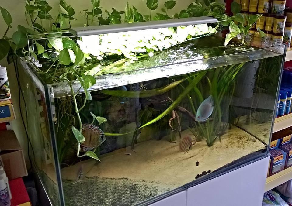invertrebrati e piante acquatiche - rieti - aquaria di marchetti ... - Piante Galleggianti Acquario Chiuso