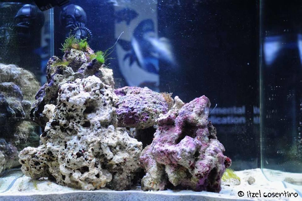 pesci marini, acquari marni, pesci acqua salata, Rieti