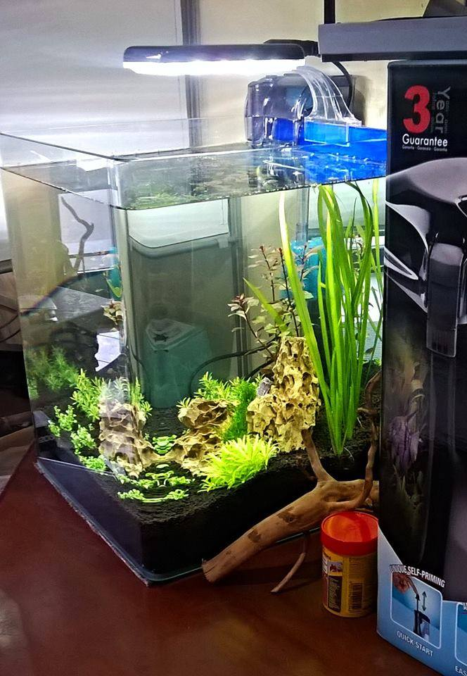 Vendita acquari rieti, acquari rieti, pesci rieti, allestimento acquari rieti, manutenzione acquari rieti