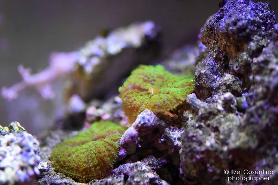 gamberetti d'acquario, invertebrati marini, invertebrati acquatici, spugne, acquari marini. rieti