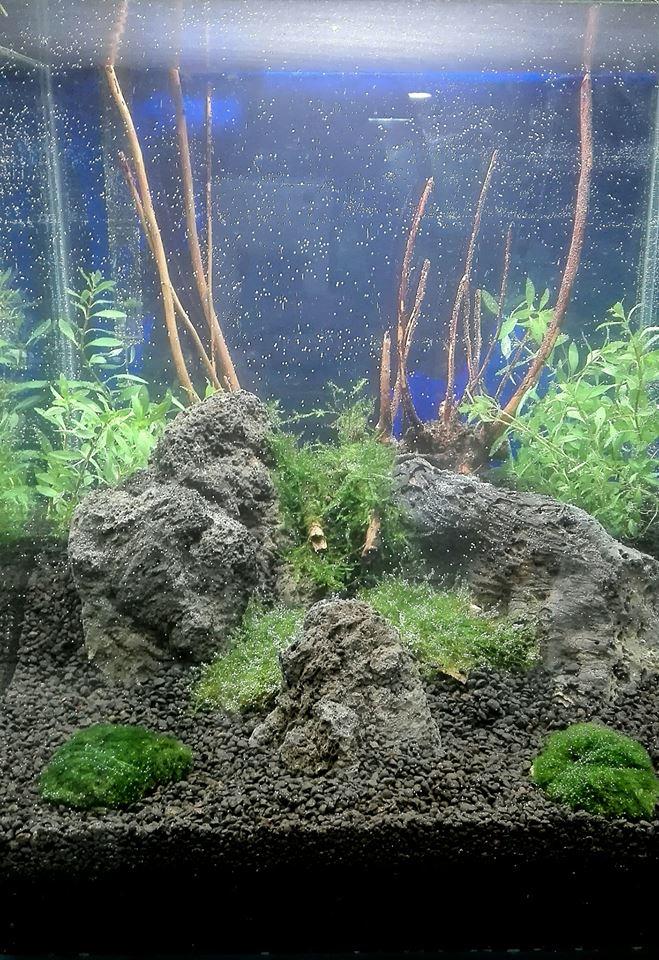 piante acquatiche, piante per acquario, accessori per acquario, piante acquatiche, rieti