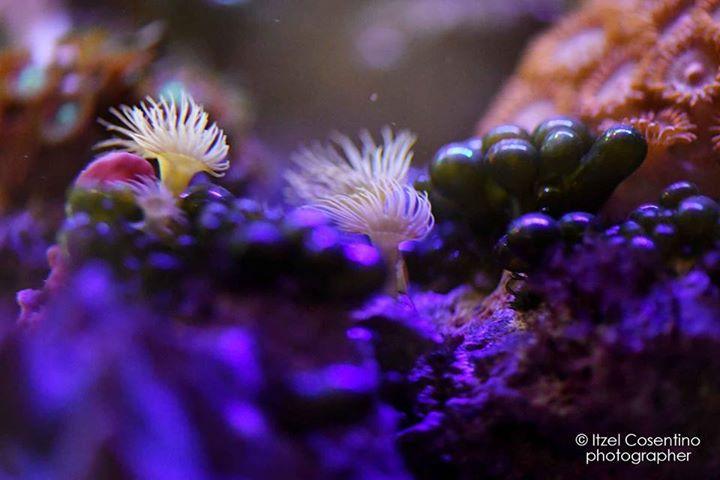 acquari marini, acquariologia, rieti