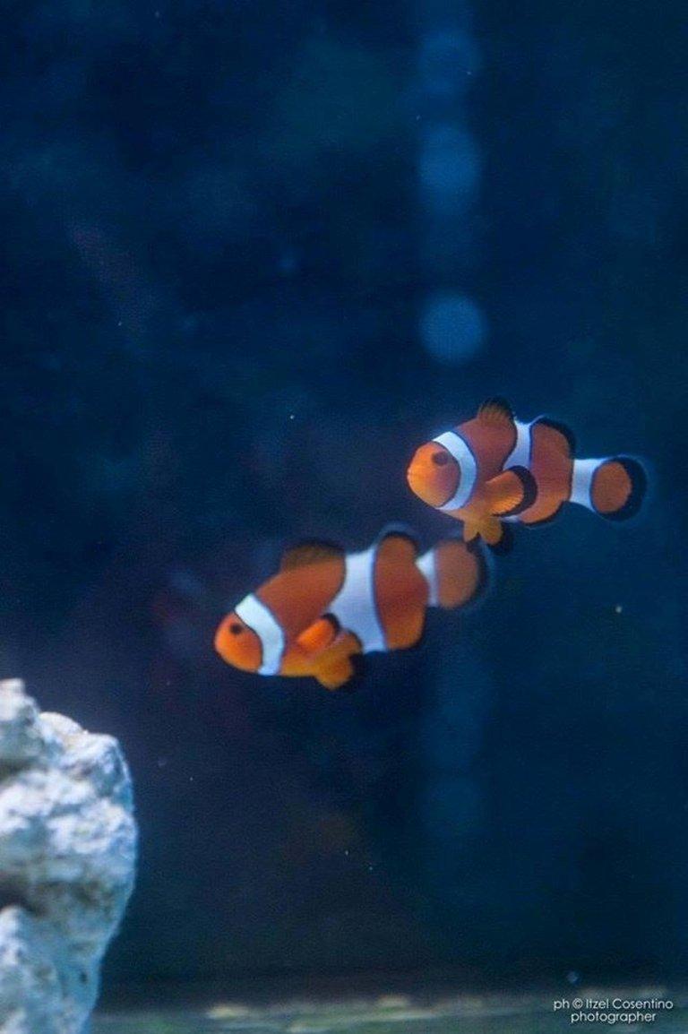 acquariologia Rieti