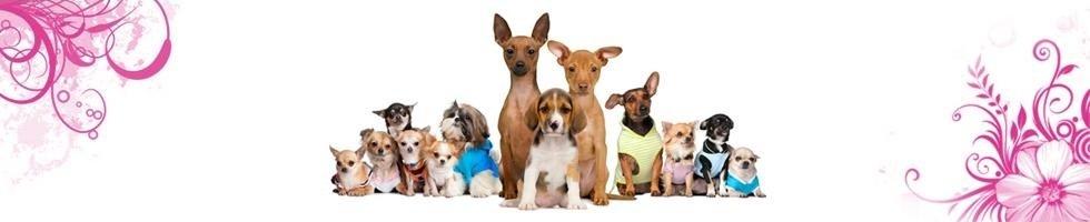 Articoli per animali