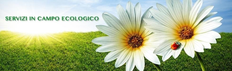 servizi in campo ecologico