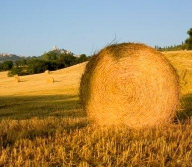 concimi e fertilizzanti, fieno, , grano, balle di fieno, paesaggio