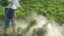 qualità dei prodotti, agricoltura, fertilizzanti, concimi, agricoltura all' ingrosso