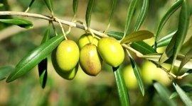affidabilità, risultato, piante, coltiva, agricoltura
