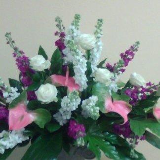 pianta di orchidea rosa