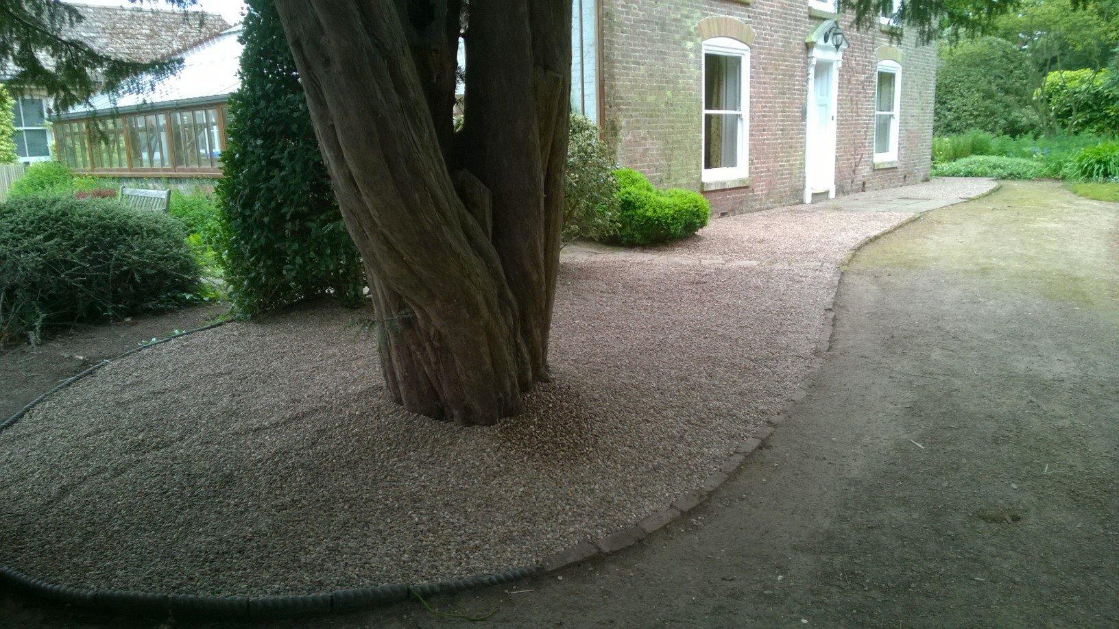 tree on the footpath