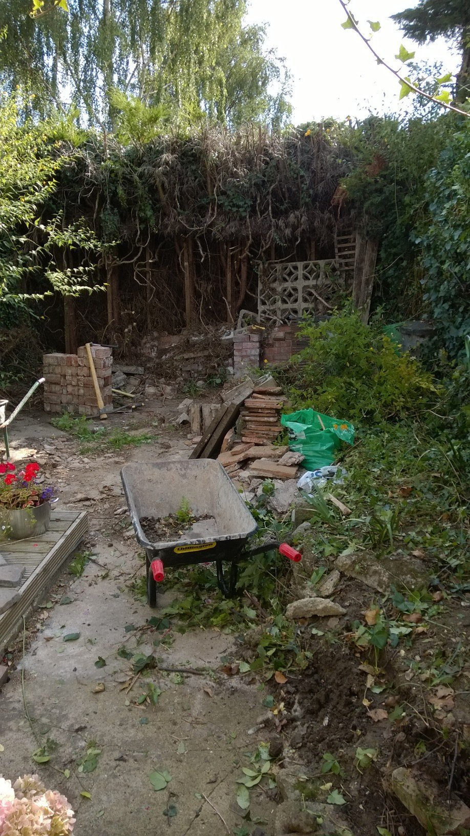 uncleaned garden area