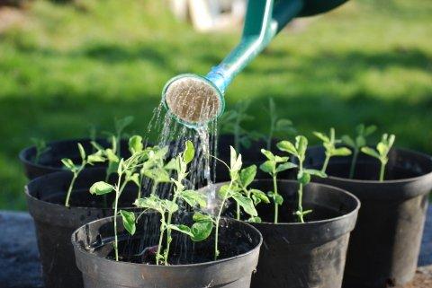 piante da vaso