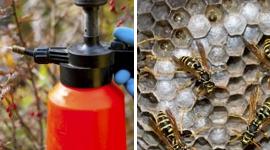 disinfestazione da vespe, disinfestazione da zanzare, disinfestazione da blatte