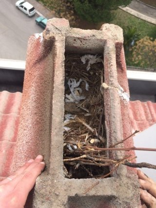 rimozione nidi di uccelli
