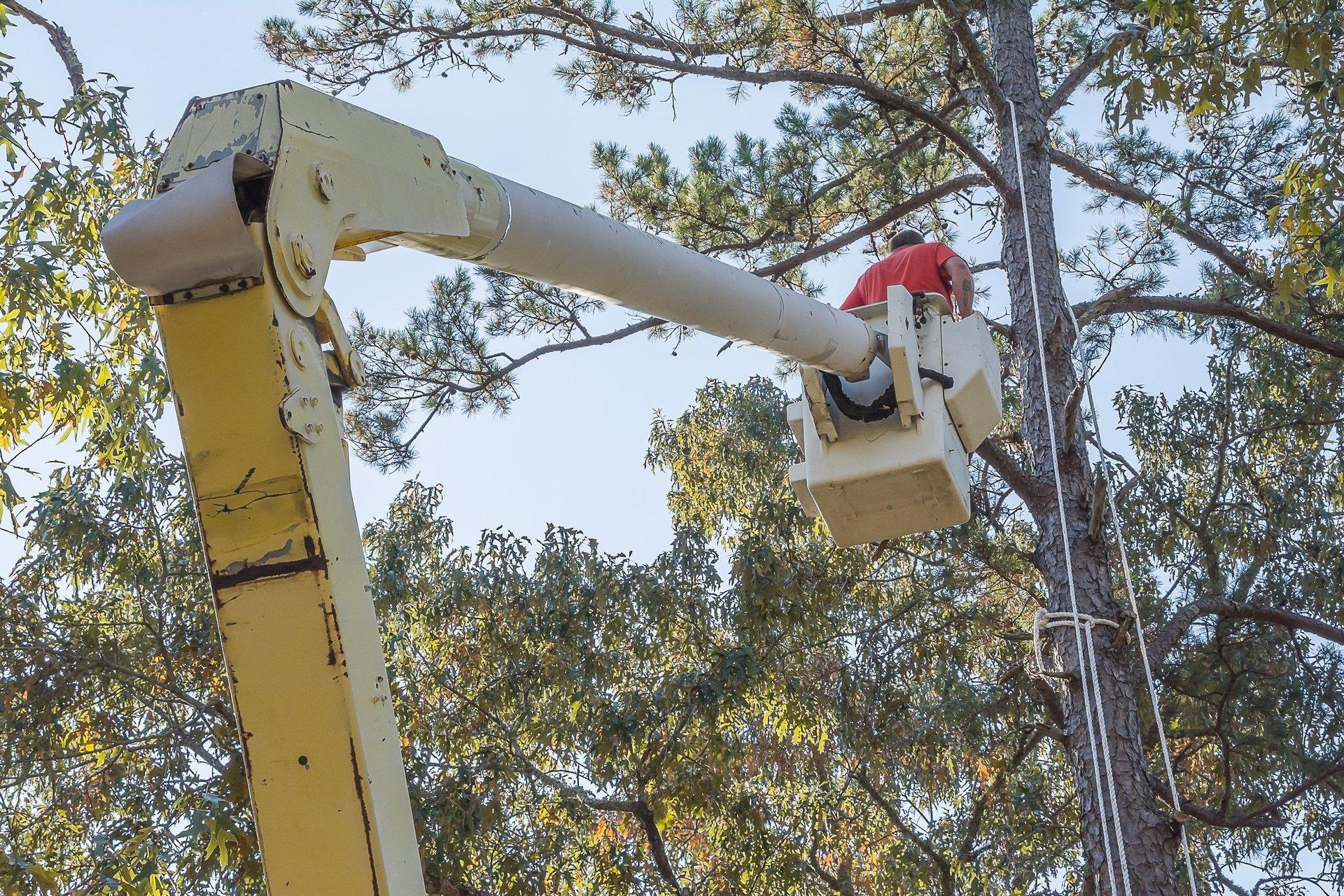 operaio pota un albero