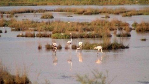 fenicotteri nella laguna di Venezia