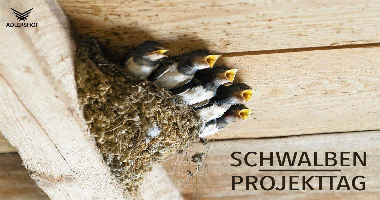 Rittergut Adlershof Umweltzentrum - Schwalbenprojekttag © Jens Reiher