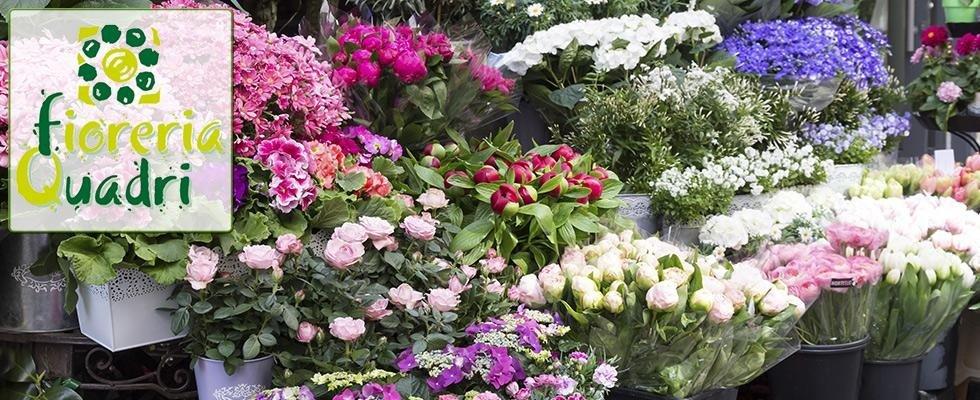 piante-ornamentali-per-interni