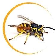 disinfestazione vespe