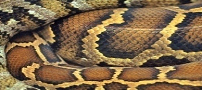 disinfestazione serpenti
