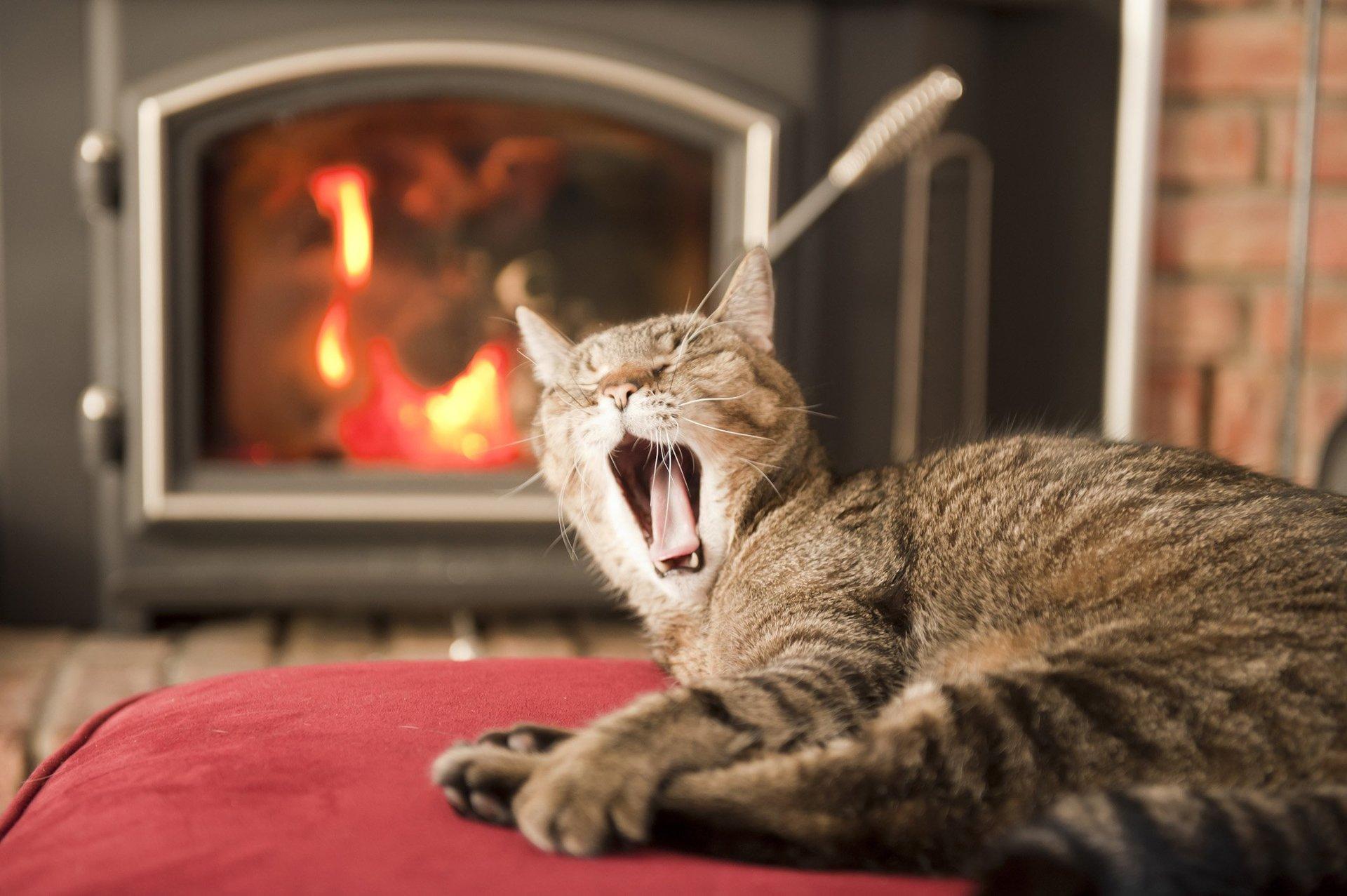 Alla luce e al calore del fuoco...