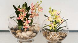 Vendita piante finte roma dimension flowers servizio for Piante rampicanti finte