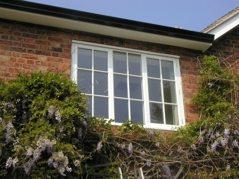 White window surrounded with plants