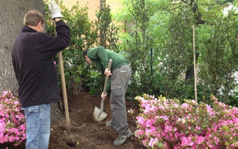 piantumazione fiori Bologna Verde