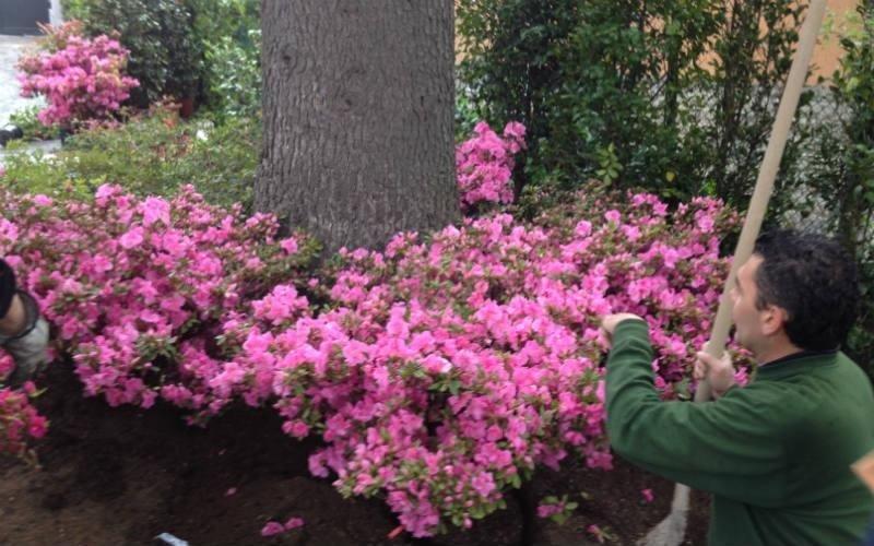 decorazione giardini Bologna