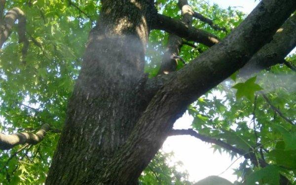 impianti antizanzare per alberi