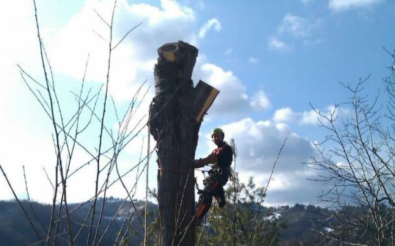 potatura progressiva albero