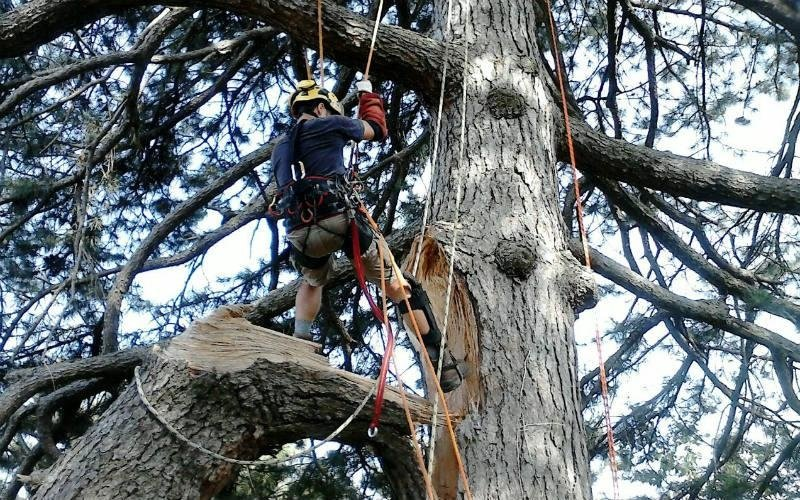 abbattimento albero Bologna Verde