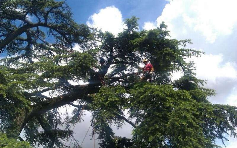 servizio potatura alberi case private