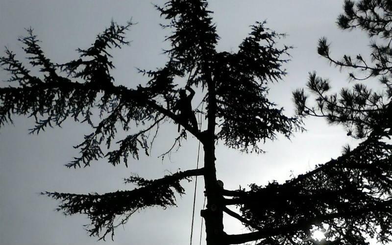 abbattimento albero nei boschi Bologna
