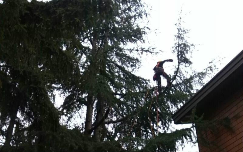 potatura albero tree climbing